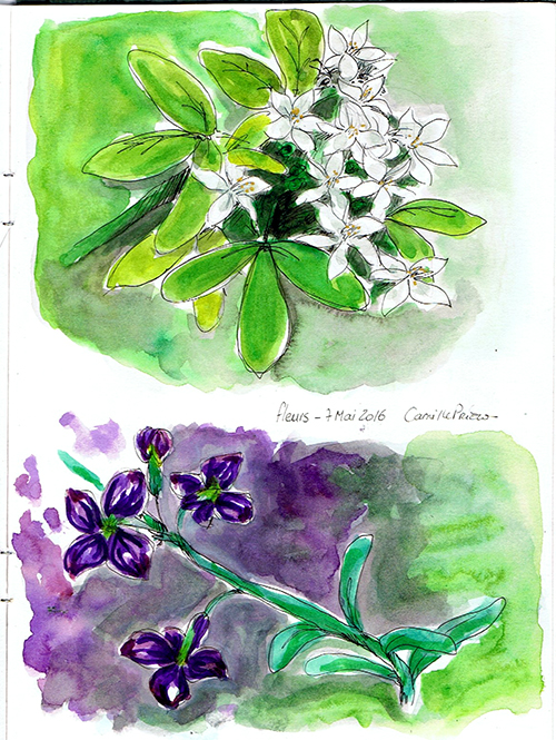 fleurs_chez_ange.jpg